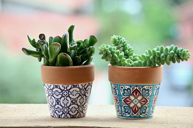 Come dipingere i vasi da giardino: scelta di colori e vernici